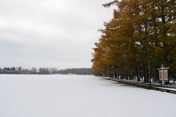 Nov124